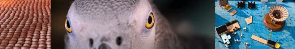 Linzer Höhenrausch 2015: Das Geheimnis der Vögel